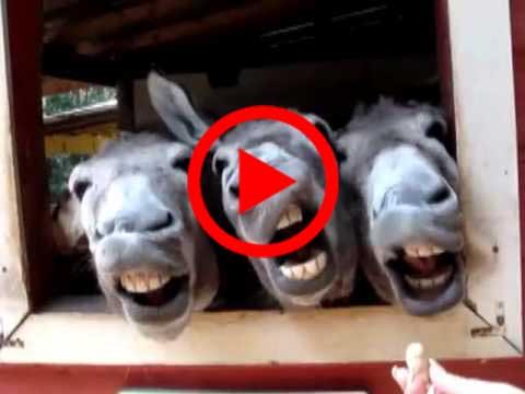 أفضل 10 مقاطع للحيوانات المضحكة