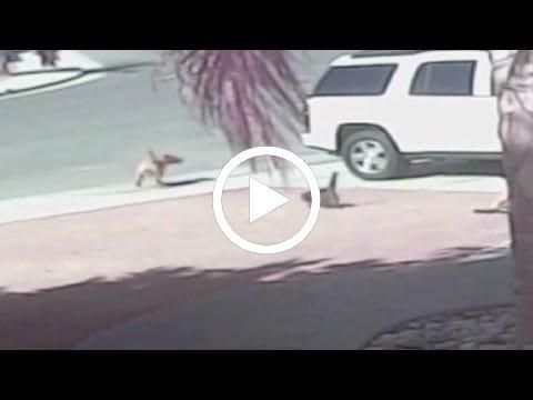 قط ينقد طفل من كلب هاجمه