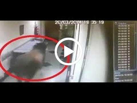 بالفيديو: ثور يطارد الممرضات بمستشفى برازيلي