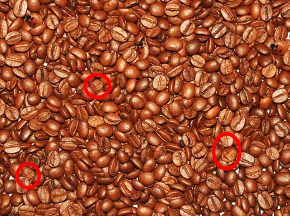 حل وجوه الاطفال في القهوة