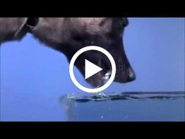 اذهلني هذا المقطع جداً..كيف يشرب الكلب الماء..سبحانك ربي مااعظمك