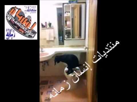 كلب ذكي يعرف كيف يستخدم الحمام..dog