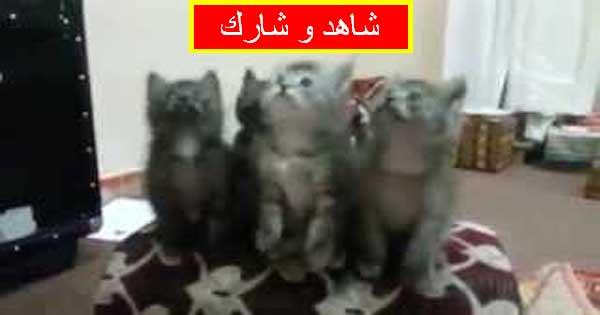 قطط عيد مبارك
